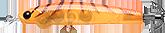 海老オレンジグロー